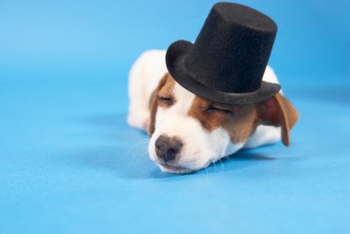 シルクハット「Dog wearing top hat」:スマホ壁紙(17)