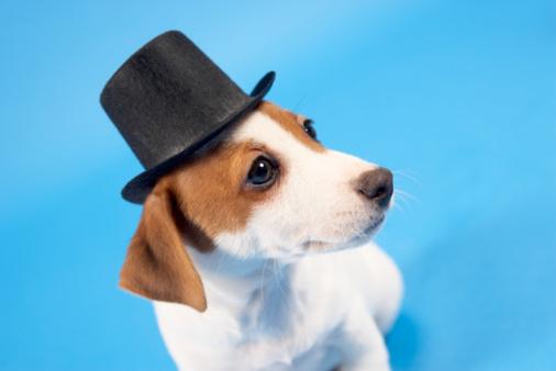 シルクハット「Dog wearing top hat」:スマホ壁紙(19)