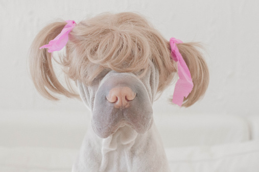 Hairstyle「Dog wearing wig with pigtails」:スマホ壁紙(10)