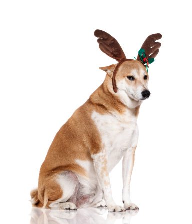 Headband「Dog wearing reindeer antlers」:スマホ壁紙(1)