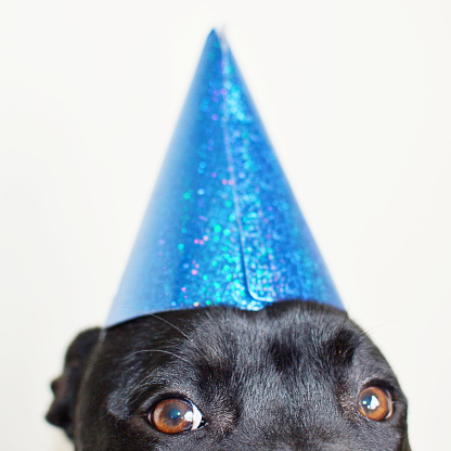Animal Eye「Dog wearing a party hat」:スマホ壁紙(2)