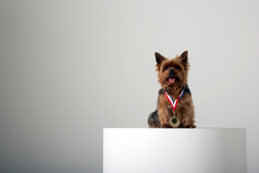 Three Quarter Length「Dog wearing a gold medal」:スマホ壁紙(1)