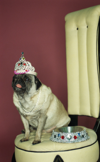 Tiara「Dog wearing tiara with jeweled bowl」:スマホ壁紙(6)