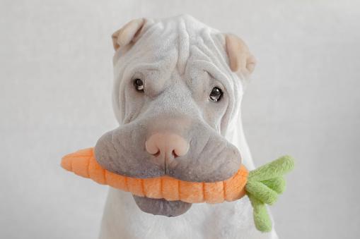 ぬいぐるみ「shar-pei dog with carrot toy in its mouth」:スマホ壁紙(1)