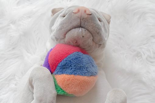 ぬいぐるみ「shar-pei dog lying on its back with a ball」:スマホ壁紙(2)