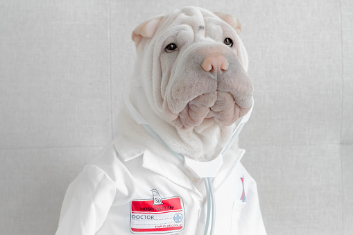 Male Likeness「Shar-pei dog dressed in a doctor's costume」:スマホ壁紙(5)