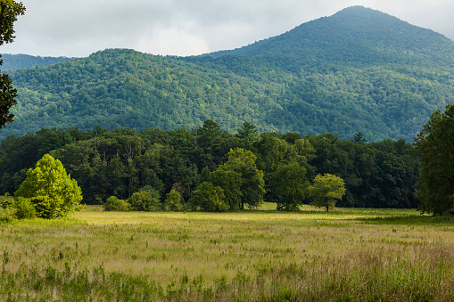 Cades Cove「Meadow in Cades Cove, Great Smoky Mountains」:スマホ壁紙(3)