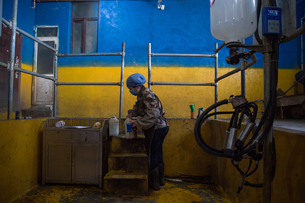 Waiting「In Rural China, Small Dairy Farms Are Dying Out As Milk Market Changes」:写真・画像(15)[壁紙.com]