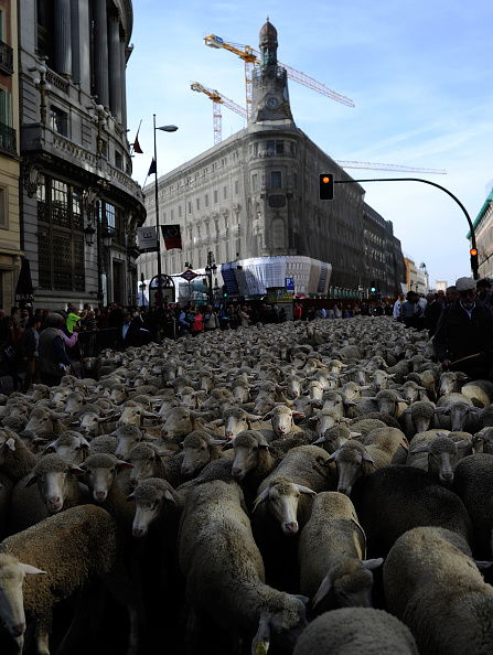 Footpath「Sheep Invade Madrid During Celebration Of Seasonal Livestock Migration」:写真・画像(8)[壁紙.com]