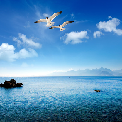 Seagull「Seascape image with flying seagull and rocky shore in Antalya」:スマホ壁紙(10)