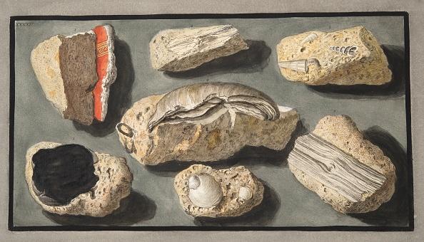 Specimen Holder「Specimens Of Tufa Found In And Around Herculaneum」:写真・画像(10)[壁紙.com]