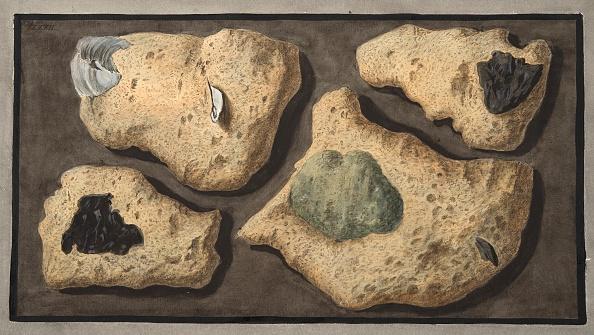 Specimen Holder「Specimens Of Tufas From The Quarrys Near The Grotta Of Pausilipo」:写真・画像(14)[壁紙.com]