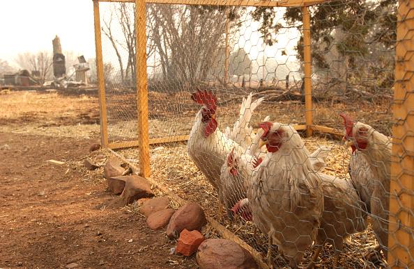 Farm「Rodeo Wildfire」:写真・画像(17)[壁紙.com]