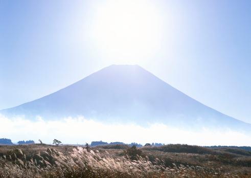 Japanese pampas grass「Mt. Fuji」:スマホ壁紙(7)
