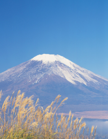 Japanese pampas grass「Mt. Fuji」:スマホ壁紙(12)