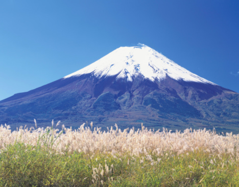 Japanese pampas grass「Mt. Fuji」:スマホ壁紙(6)