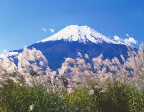 Japanese pampas grass「Mt. Fuji」:スマホ壁紙(4)