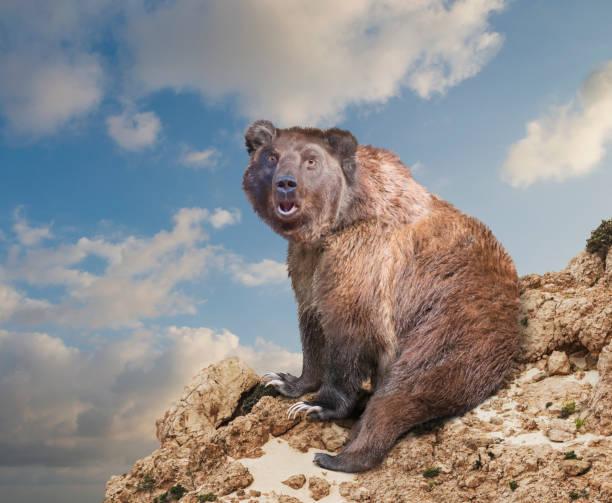 Surprised bear at edge of rocky cliff under cloudy sky:スマホ壁紙(壁紙.com)