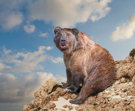 Brown Bear「Surprised bear at edge of rocky cliff under cloudy sky」:スマホ壁紙(6)