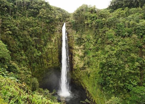 Akaka Falls「Akaka waterfall in the big island, USA」:スマホ壁紙(7)