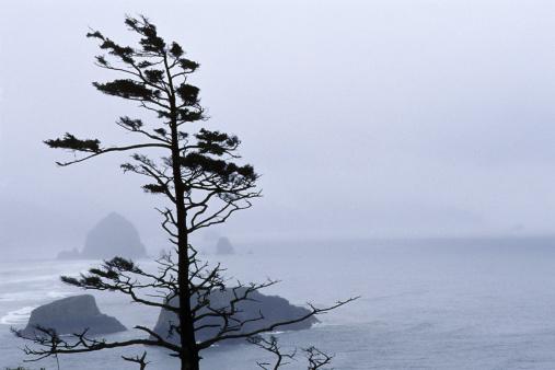 Ecola State Park「Fog over Ecola State Park, Oregon coast, USA」:スマホ壁紙(12)