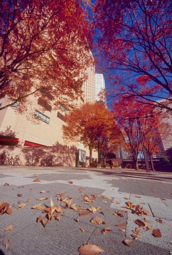 秋「Fallen Leaves at Shinjuku, Shinjuku, Tokyo, Japan」:スマホ壁紙(4)