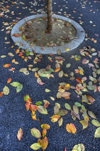 秋+京都「Fallen leaves on the ground around a tree trunk」:スマホ壁紙(8)