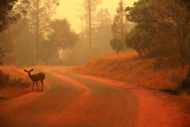 Massive Wildfire Spreads To 80,000 Acres, Scorches Homes Near Redding, CA:ニュース(壁紙.com)