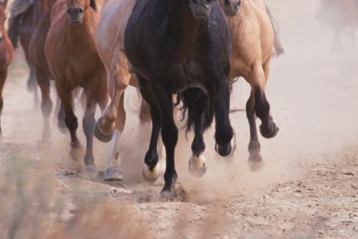 Hoof「Mustangs (Equus caballus) running, kicking up dust」:スマホ壁紙(14)