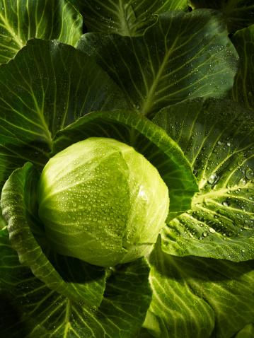 Cabbage「Cabbage」:スマホ壁紙(7)