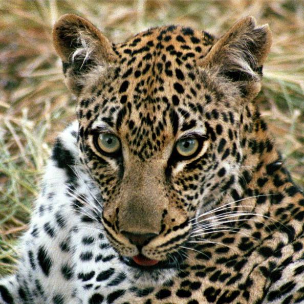 Animals Hunting「Kruger National Park」:写真・画像(6)[壁紙.com]