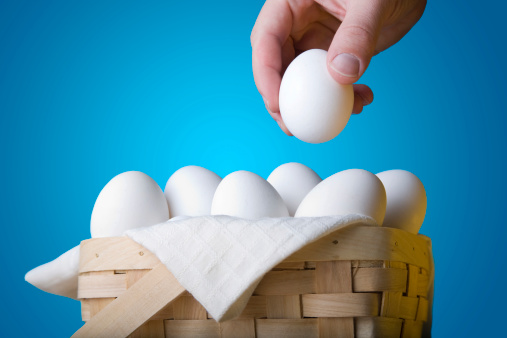 Animal Egg「All Your Eggs In One Basket」:スマホ壁紙(19)