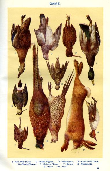 Hen「Mrs Beeton 's cookery book - game」:写真・画像(11)[壁紙.com]