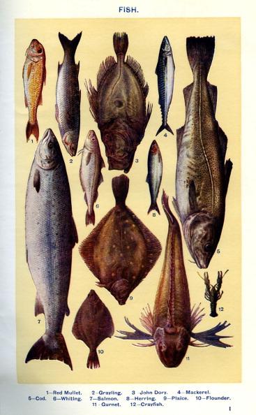 Archival「Mrs Beeton 's cookery book - fish」:写真・画像(18)[壁紙.com]