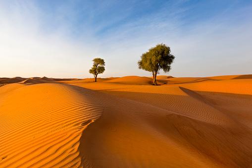 Single Tree「life in the desert」:スマホ壁紙(18)