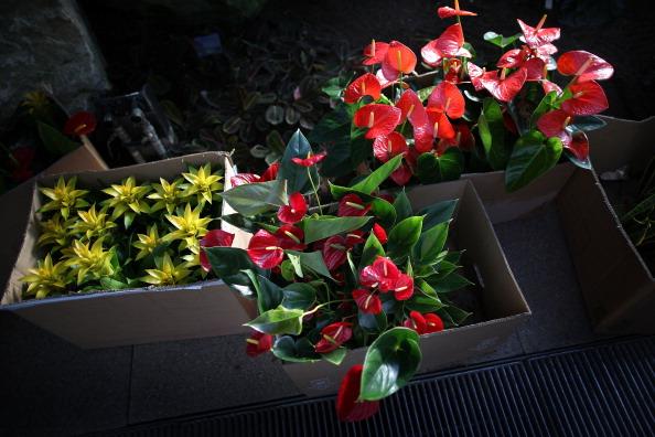 Ornamental Garden「Kew Garden's Launch Their Tropical Extravaganza Festival」:写真・画像(9)[壁紙.com]