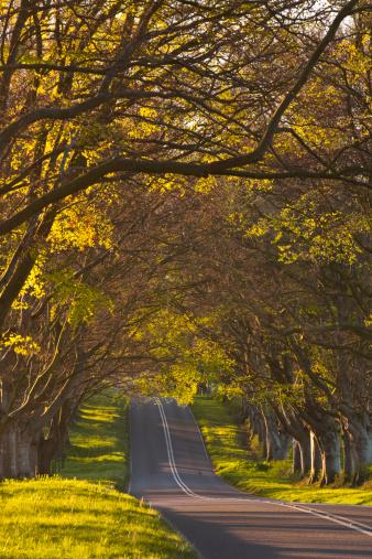 Avenue「The beech avenue at Kingston Lacy in Dorset」:スマホ壁紙(19)