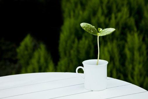 Focus On Foreground「sprout in the cap on the table」:スマホ壁紙(1)