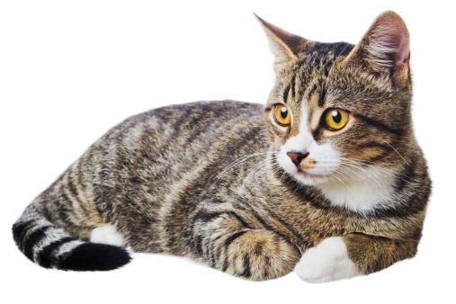子猫「体にホワイトの猫」:スマホ壁紙(17)