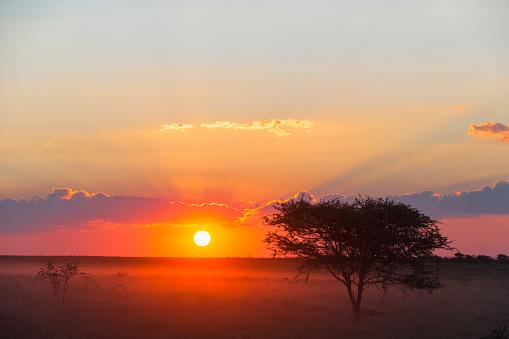 Steppe「Namibia, Etosha National Park, sunset」:スマホ壁紙(15)