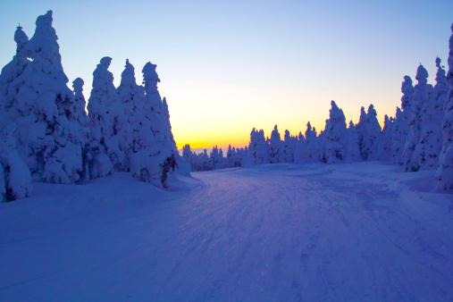 Ski Track「Trees at Zao mountain range, Yamagata Prefecture, Japan」:スマホ壁紙(12)