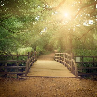 Footbridge「Wooden bridge」:スマホ壁紙(19)