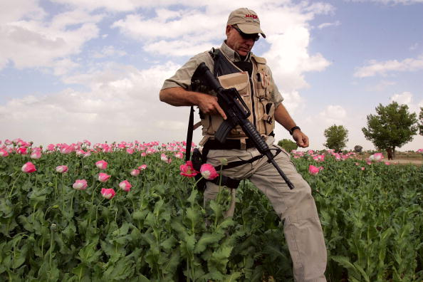 Oriental Poppy「Foreign Troops Targeted In Afghan Suicide Attack」:写真・画像(8)[壁紙.com]