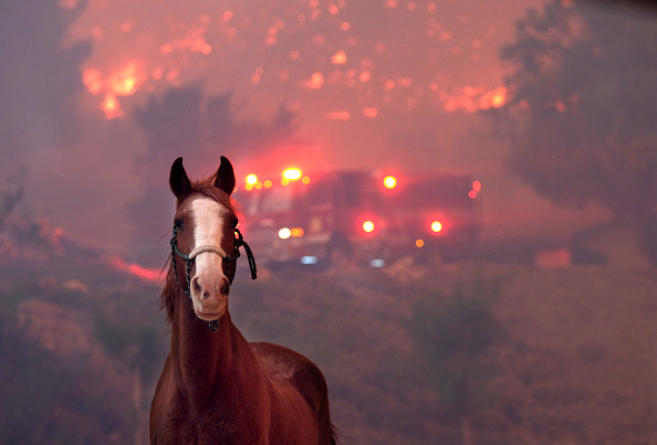 Horse「Fast-Spreading Hill and Woolsey Fires Force Evacuations In California's Ventura County」:写真・画像(8)[壁紙.com]