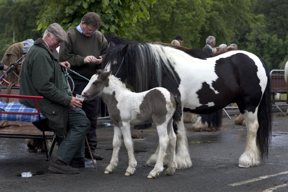 Tom Stoddart Archive「Appleby Horse Fair」:写真・画像(16)[壁紙.com]