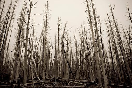 Deforestation「Burnt Out Forest」:スマホ壁紙(14)