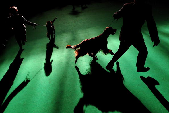 Dan Kitwood「Dogs And Owners Gather For 2010 Crufts Dog Show」:写真・画像(18)[壁紙.com]