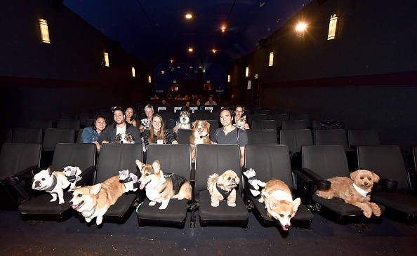 Bestpix「ALPHA - Bring Your Own Dog (BYOD) Screening In San Francisco」:写真・画像(18)[壁紙.com]