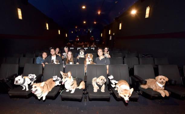 ALPHA - Bring Your Own Dog (BYOD) Screening In San Francisco:ニュース(壁紙.com)