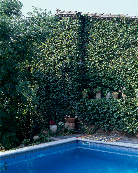Earthenware「View of creepers growing beside a swimming pool」:写真・画像(18)[壁紙.com]